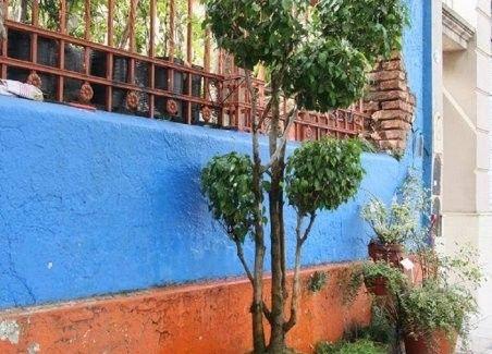 Ficus robado en Villa del Parque