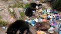 gatod-abandonados