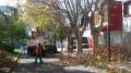 Poda invernal de arboles