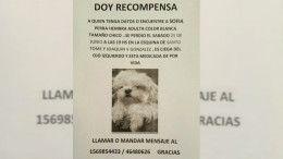 Sofia, perra pedida