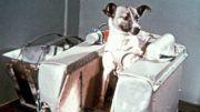 Laika, la perrita astronauta
