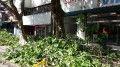Vecinos impidieron la poda de árboles en la calle Cuenca