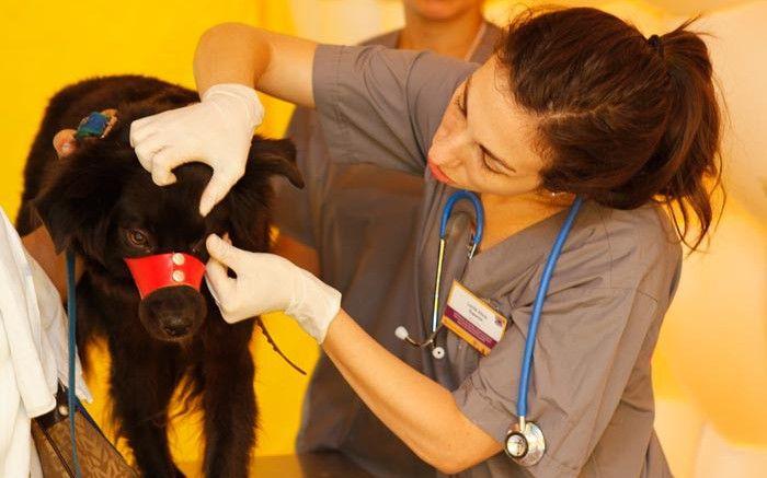 Atención veterinaria gratuita en la Ciudad