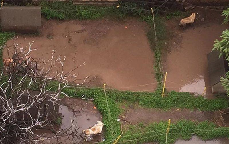 Perros en pésimas condiciones en criadero de Villa del Parque