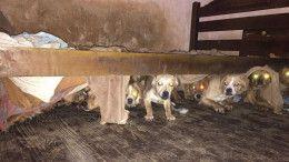Perros hacinados La Paternal