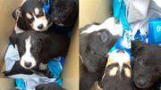 Perros rescatados Villa Santa Rita