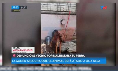 Perro rescatada Villa Devoto