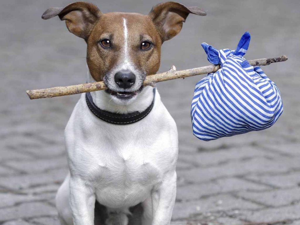 Perros adopcion mascotas