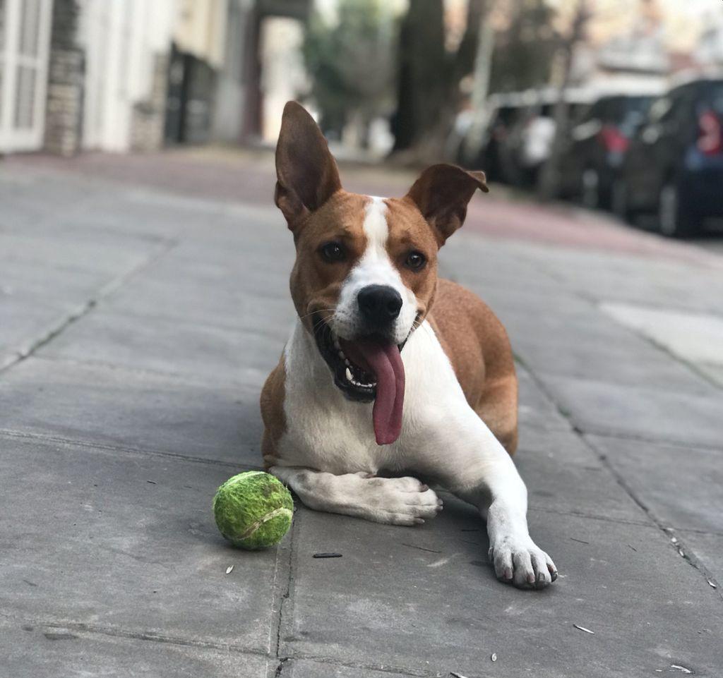 Perro Dona Villa del Parque